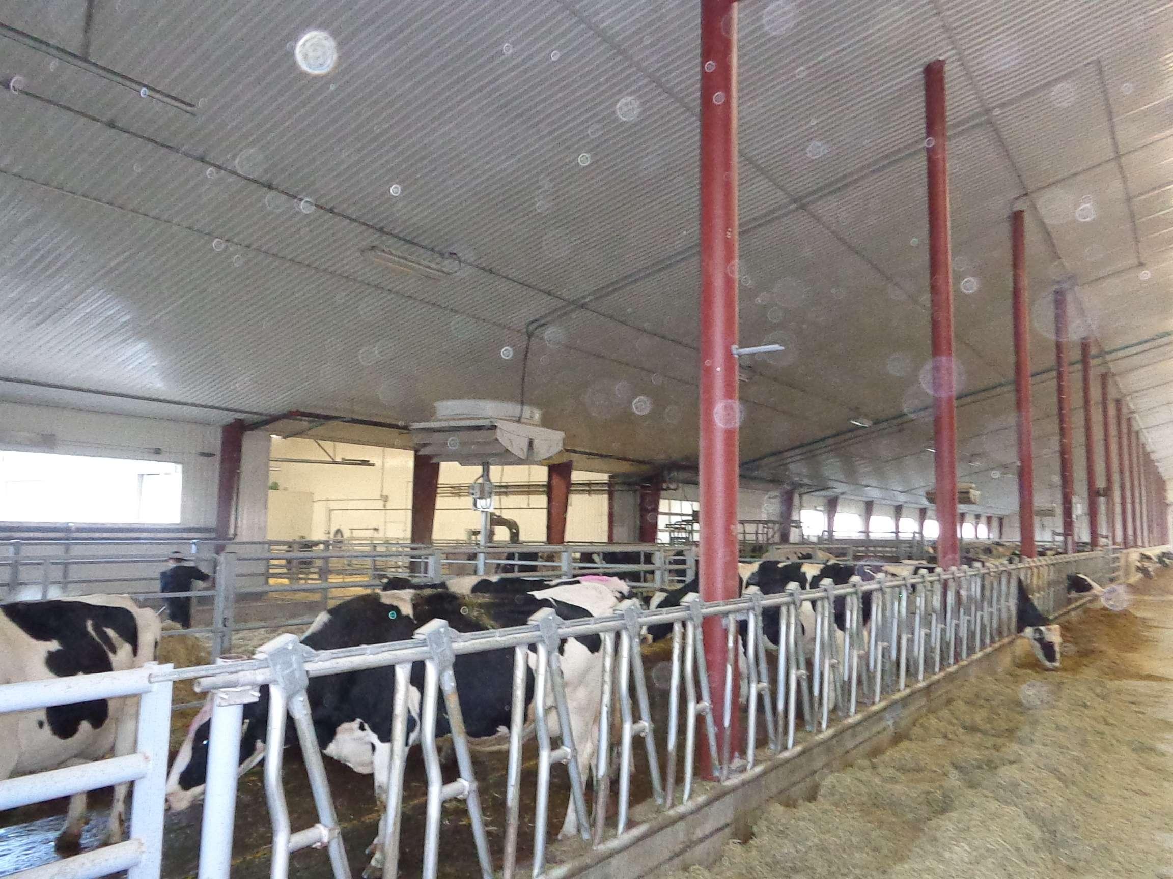 Rush Lake, SK - Main Center Dairy